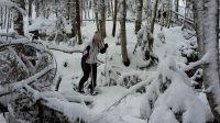 schneeschuhwandern_hlw_bad_aussee_1